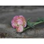 Chic Antique Ranunkel antique rose-01